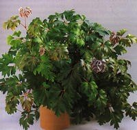 Plantes d int rieurs faciles entretenir arbresplantes007 - Plantes d interieur faciles d entretien ...